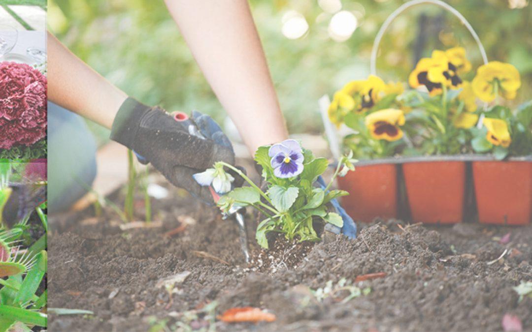 San Jorge: Arte y Jardinería